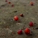 Berries by Akshay Dhavle