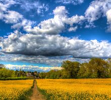The Summers Day Farm by DavidHornchurch