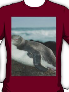 Unbelievable Yellow-Eyed Penguin