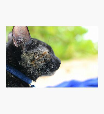 Zen Kitty Photographic Print