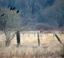 A Murder of Crows by Mikeinbc1