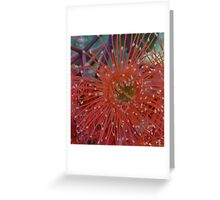 Red Flowering Gum Greeting Card