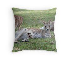Eastern Grey Kangaroos, NSW, Australia Throw Pillow