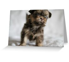 Puppy 3 Greeting Card