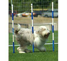 pole position Photographic Print