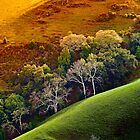 """Hills Alive With Color"" by Donn Hoyer"