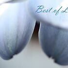 Best of Luck - Baby Blue Greeting Card by Susan Brown
