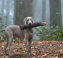 Bark Softly and Carry a Big Stick by ImageOregon