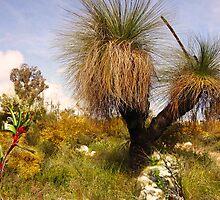 Springtime in the Aussie bush by georgieboy98