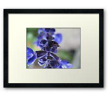 Blue Mystery Framed Print