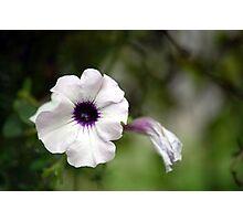 White and Dark... Photographic Print