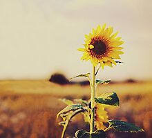 French Sunflowers by Indea Vanmerllin