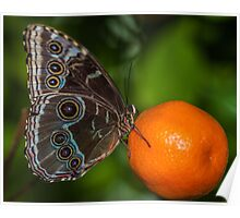 Butterfly on an Orange Poster