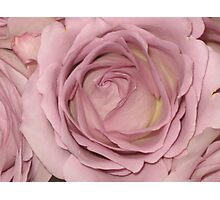 My favourite color and rose Photographic Print