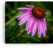 Bumblebee on cone flower Canvas Print