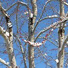 Red Buds in the Snow by Lisa G. Putman