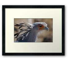 My Feathery Crown Framed Print