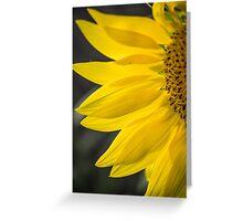 Beautiful Sunflower Closeup Greeting Card
