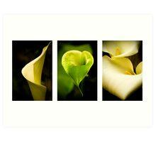 Lily triptych Art Print
