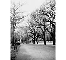 Cold Limbs Photographic Print