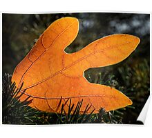 Autumn leaf on the ground Poster