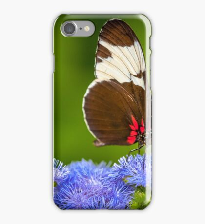 Butterfly on green background and the grass iPhone Case/Skin