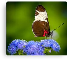 Butterfly on green background and the grass Canvas Print