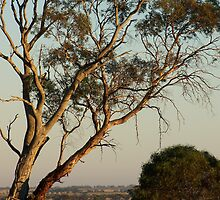 Towards Nhill by geeko