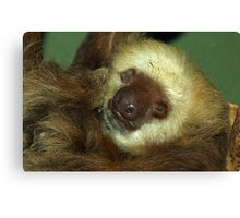 Sloth Canvas Print