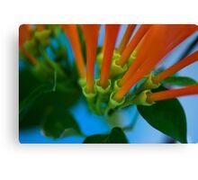 Spring Colour Canvas Print