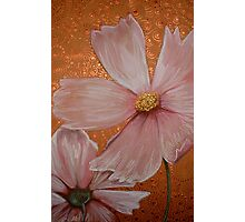 Pink Cosmos Photographic Print