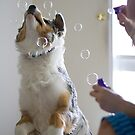 Bubbles are Fun by Jazzyjane