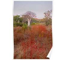 Boab in field of rosella Poster