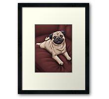 Red Sofa Pug Framed Print