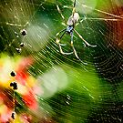 Spider by amante