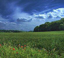 Poppy Field, Worsborough Reservoir, Barnsley, Yorkshire. by Andy Smith