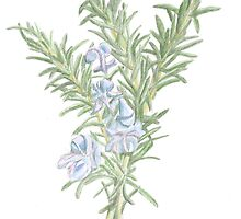 Flowering Rosemary by DominicWhiteArt