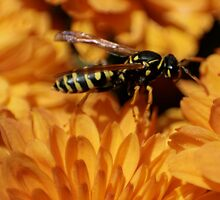 Wasp by Lita Medinger
