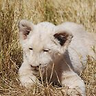 White Lion Cub by laureenr