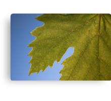Wine Leaf Canada Canvas Print