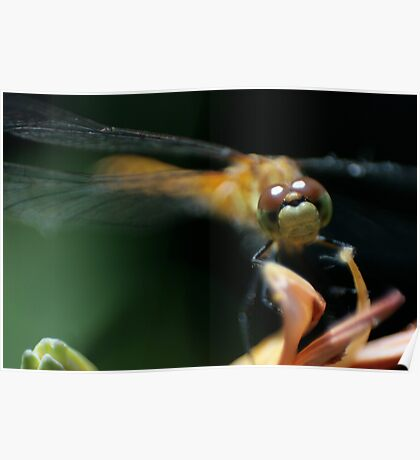Staring Dragonfly Poster