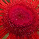 upclose red by goofygirl1977