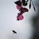 Early morning bee by Rowan  Lewgalon