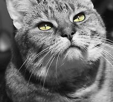 Greta Garbo Cat Strikes a Pose by simpsonvisuals