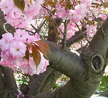 Spring Blooming Tree Trunk by annimoonsong