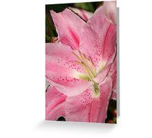 Pink Stargazer Lily Greeting Card