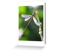 Dragonfly at sunset Greeting Card