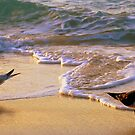 Beach Birds by Robin Webster