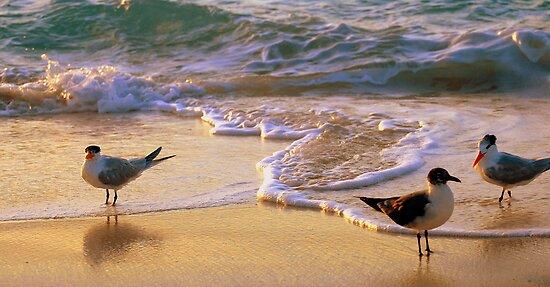 Beach Birds by Robin Webster
