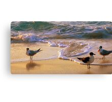 Beach Birds Canvas Print